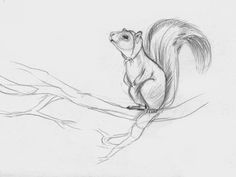 Shadiah Sketches: Squirrel for Magic Cabin • Find more at https://www.facebook.com/ShadiahArt + http://www.pinterest.com/ShadiahInk if you're for: #illustration #drawing #painting #magazine #editorial #design #cartoon #sketch #how #to #draw #timelapse #childrensillustrator #charlottesville #virginia #ink #watercolor #graphic #story #fairies #animals || ✤