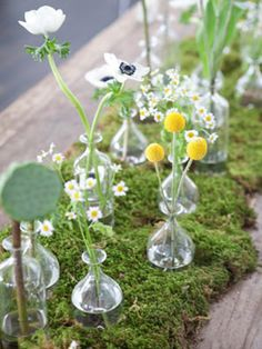 Moss & Wildflowers - anenomes, lotus pods and chamomile with moss