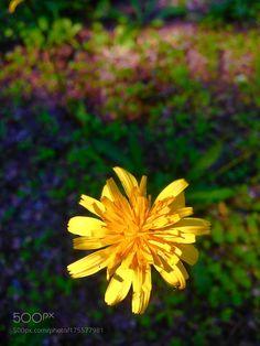 Piccolo fiore di campo by dtignola. @go4fotos