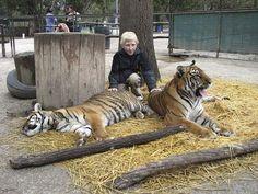daredevil petting zoo