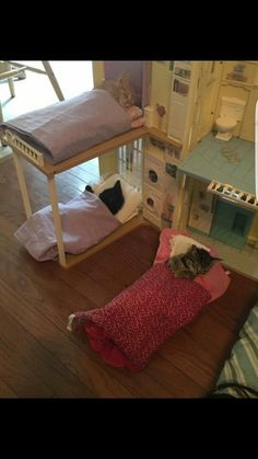 Kitties and bunkbeds!