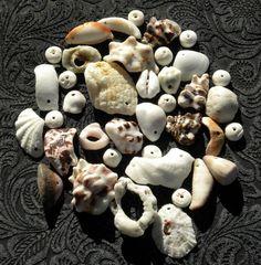 Hawaiian shells Puka shells all drilled for jewelry by GlassLynx, $18.00