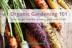 Want to start organic gardening? Find out how to easily begin your own organic garden and start growing your own food this year!