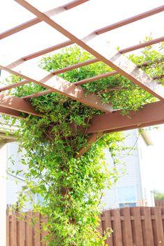 Climbing Plants Fast Growing, Indoor Climbing Plants, Climbing Flowering Vines, Climbing Hydrangea, Climbing Flowers, Climbing Vines, Outdoor Plants, Plants Indoor, Outdoor Spaces