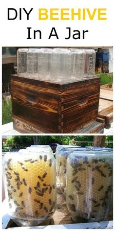 How To Make A Beehive In A Jar DIY--if we want honey, maybe my husband could make this for our backyard or for my parents. Outdoor Projects, Garden Projects, Save The Bees, Hobby Farms, Bees Knees, Bee Keeping, Farm Life, Gardening Tips, Gardening Zones