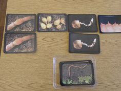 earthworm life cycle and parts of pictures Earthworms, Zoology, Life Cycles, Insects, Pictures, Day Care, Photos, Grimm