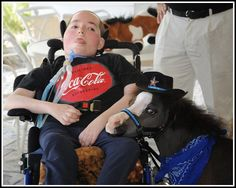Gentle Carousel miniature horses visit hospitals, assisted living programs, hospice programs, Alzheimer patients, adults and children with disabilities, foster children and at-risk and abused children.