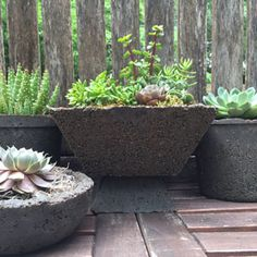 Creating Hypertufa Containers for a Succulent Centerpiece | Garden Club