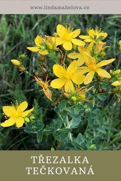 Korn, Herbalism, Healing, How To Plan, Pharmacy, Nature, Plants, Herbal Medicine, Naturaleza