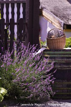 Lavender-always in my garden! Such a beautiful smell. Lavender Cottage, French Lavender, Lavender Blue, Lavender Fields, Lavender Flowers, Love Flowers, Purple Flowers, Beautiful Flowers, Beautiful Things