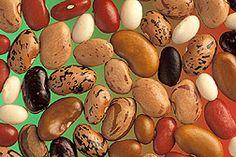 Pulses (legume) http://en.wikipedia.org/wiki/Pulse_(legume)