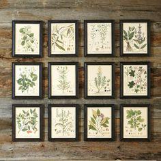 Heines botanischen gerahmte Kunst-gartendekoration