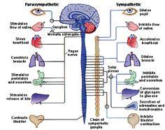 Postural Tachycardia Syndrome - POTS tootiredtolivebutstillbreathing.blogspot.com