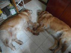 Sleeping Golden