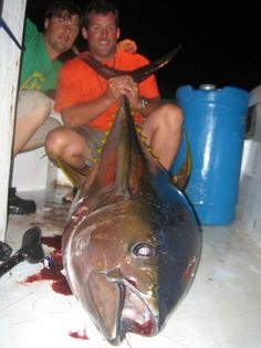 Yellowfin tuna charter fishing out of Grand Isle, Louisiana.  This yellowfin tuna was caught in the Gulf of Mexico with Captain Lance Walker with Fish Commander Guide Service.  It weighed over 150 pounds!  Yellowfin tuna are a lot of fun to catch and are really great to eat! Book your offshore yellowfin tuna fishing trip today! Day trips and overnight fishing trips available!    www.fishcommander.com