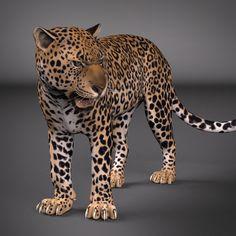 Leopard Rig Ma Free - 3D Model