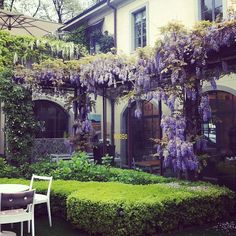 """Wisteria Arbor- no permit needed for a freestanding arbor. It's considered """"landscaping"""" not structure."""