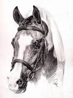 Pinto Portrait by Define-X.deviantart.com on @DeviantArt