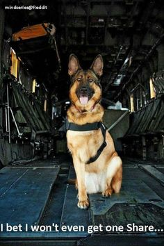 Another Pinner said: Come on buddy!!! You're a hero, we will share you forever!