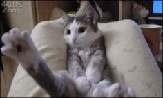 """""""Save yourselves, it's too late for me…"""". OMG!  This is so funny!  The poor baby!  Click to see GIF."""