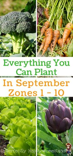 Everything You Can Plant in September for Zone 1, 2, 3, 4, 5, 6, 7, 8, 9 and 10 for Your Fall Vegetable Garden