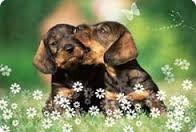 Billedresultat for hundehvalpe