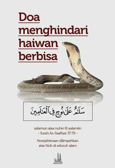 Doa Menghindari Haiwan Berbisa