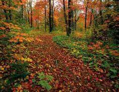 Autumn Path | 500 Piece Jigsaw Puzzle