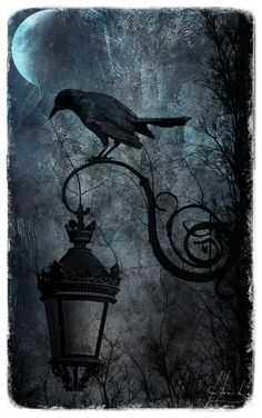 "Crows Ravens:  #Raven ~ ""See Through Sorrow,"" by Irondoom Design."