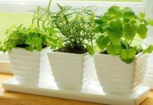 5 plants that can humidify your home and create the indoor perfect climate