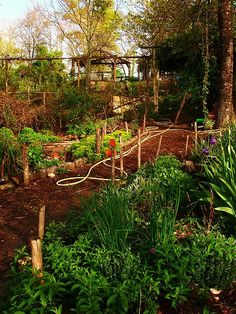 """it's a """"river"""" of compost and lovely to walk on.   The goat shed is at the top of the hill and we clean it out once a year. The chickens scratch around looking for bugs and ant the same time throw the compost towards the paths which leads down into the garden.   They keep it weed free by scratching and when the path becomes too full of compost I gather it up and throw it on the beds or use it for potting."""