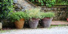 krydderurter, krukker, terracotta, terrakotta - container gardening at Terracottakrukker.dk