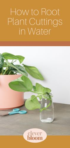 Learn how to root plant cuttings in water the easy way! Follow step by step instructions to make your very own new plants. #houseplants #propagate #propagation #indoorgardening Plant Cuttings, Propagation, Plant Care, Step By Step Instructions, Houseplants, Bloom, Gardening, Make It Yourself, Learning
