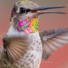 Woman Captures Stunning Photos Of Hummingbirds In Her Backyard