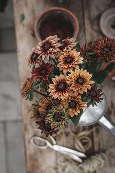 Blooming Flowers, Fall Flowers, Pretty Flowers, Unusual Flowers, Amazing Flowers, Deep Autumn Color Palette, Flora Garden, Flower Farmer, Plants Are Friends
