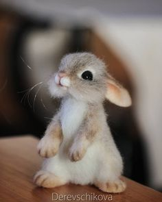 Cute And Funny Animals Videos next Cute Baby Animals Images Free once Cute Pictures Of Baby Animals Slideshow because Cute Baby Animals Videos Compilation Cute Moments Baby Animals Pictures, Cute Animal Pictures, Animals Images, Felt Animals, Animals And Pets, Funny Animals, Cute Baby Bunnies, Cute Babies, Cute Puppies