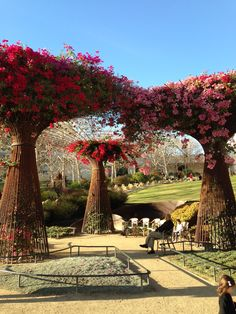 Getty Musuem.  Yes this is what the garden looked like when we were there.2014