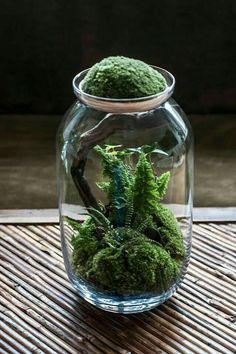 Today we look at ways to make your very own unforgettable bonsai terrarium plants. The picture Bonsai Terrarium plant here offers you a sense of the scale, and we're sure you want to have it for your home decor. Terrarium Cactus, Terrarium Containers, Garden Terrarium, Indoor Garden, Indoor Plants, Outdoor Gardens, Bonsai, Suculentas Interior, Moss Plant