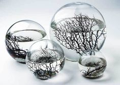 An EcoSphere is an enclosed glass sphere that houses a complete Ecosystem. Each sphere is filled with micro-organisms, bright red shrimp, algae, and filtered sea water. All these things live harmonisly together in a mini Earth. The  shrimp may live for an average of 2 to 3 years, and are known to live over 10 years. A great way to teach kids about ecosystems and the environment. #terrarium #aquarium (All the world exist within a single tiny seed)