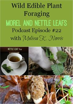 How to Forage Wild Edibles Morel Mushrooms and Nettle Leaves