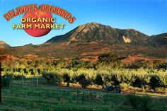 Hotchkiss, Colorado: Big B's and Delicious Orchards. Definitely a favorite stop. Their hard cider is amazing and you can try them in their tasting area! Great fresh fruit to pick, outdoor seating, and tasty grub.