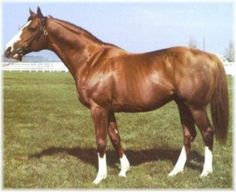 The Minstrel, sire of Palace Music and grandsire of the immortal Cigar.