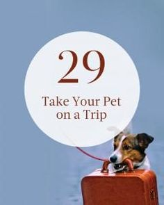 #29 on our summer bucket list: Take Your Pet on a Trip