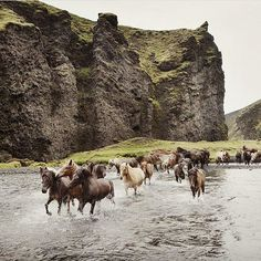 Icelandic horses  by @juliepasternak #everydayiceland                                                                                                                                                                                 More