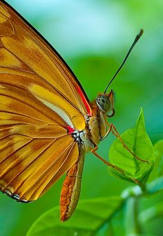 017 butterfly   Flickr - Photo Sharing!