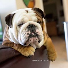 Why do they call it HUMP DAY?? @buddhabully