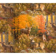 Deer in Fall Forest Nature Scene Hunting Fabric Elizabeth/'s Studio YARD