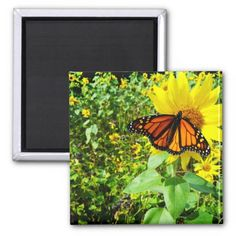 Photo of a beautiful orange Monarch Butterfly on a yellow Sunflowers. This orange monarch butterfly was nice enough to land in front of me just long enough for me to take this picture. The bright yellow follow the the butterfly lands adds to the beauty of the photo, giving it a wonderful color contrast. Multiple sizes and other items are available. Great for home or office decor. Also a great gift idea for holidays, birthdays, anniversary, and house warming. Add your own touch by adding text…