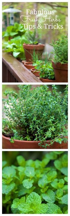 Fresh herbs make all the difference in the world in cooking. Fabulous Fresh Herbs; Tips & Tricks - thecafesucrefarine.com