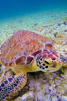 Underwater Friend by Cary Quinn on 500px , #sea_turtle